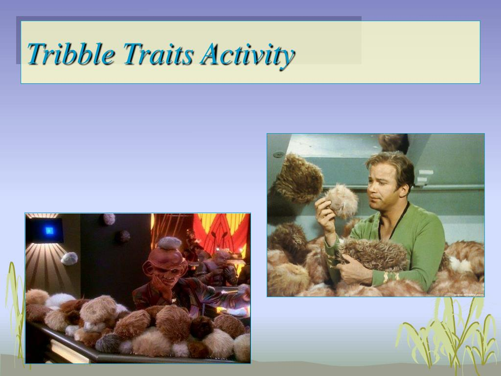 Tribble Traits Activity