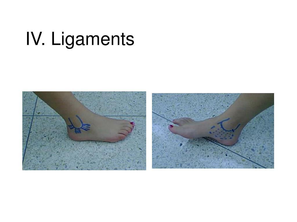 IV. Ligaments