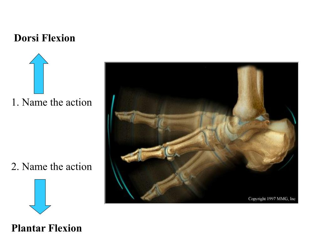 Dorsi Flexion