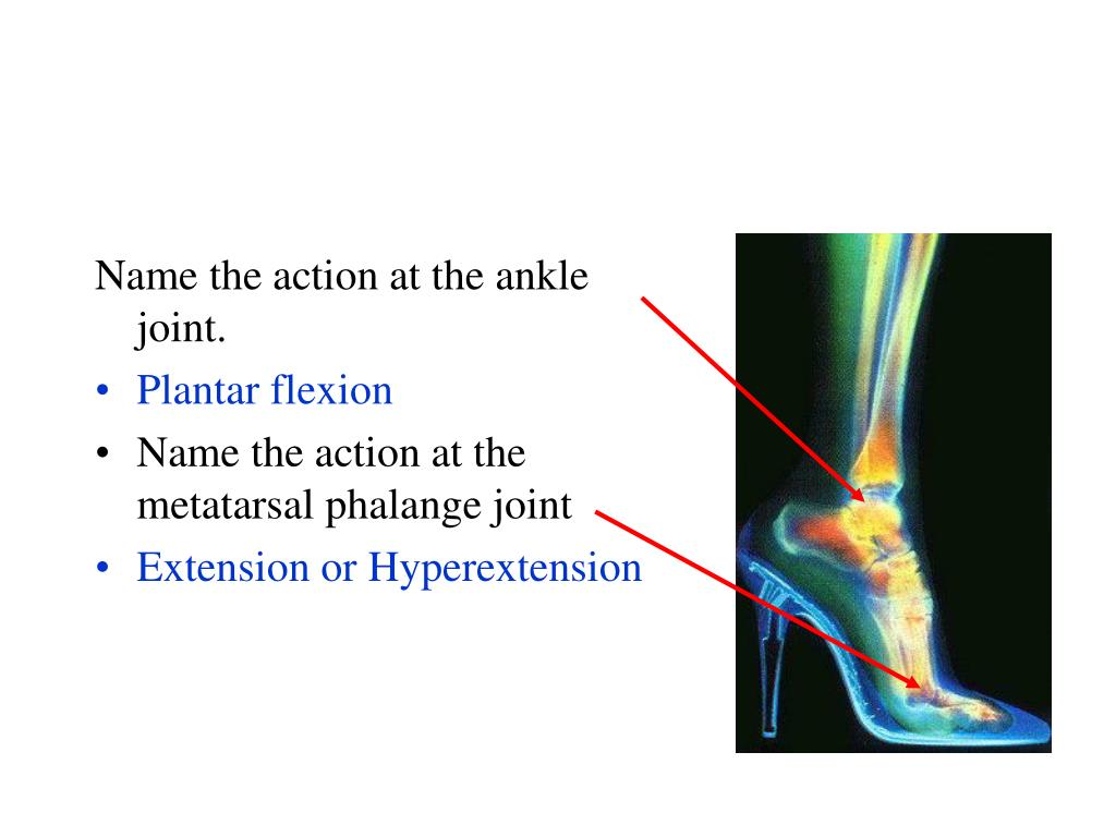 Name the action at the ankle joint.