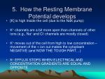 5 how the resting membrane potential develops