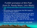 flash animation of wnt path from dr randy moon univ wash