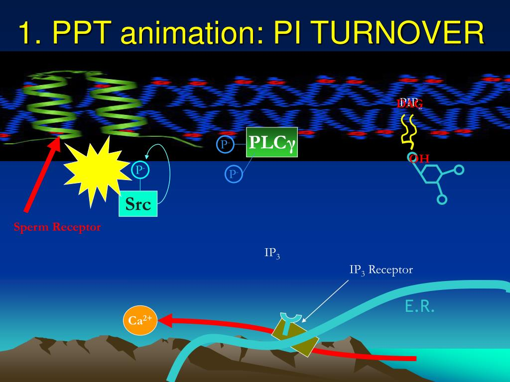 1. PPT animation: PI TURNOVER