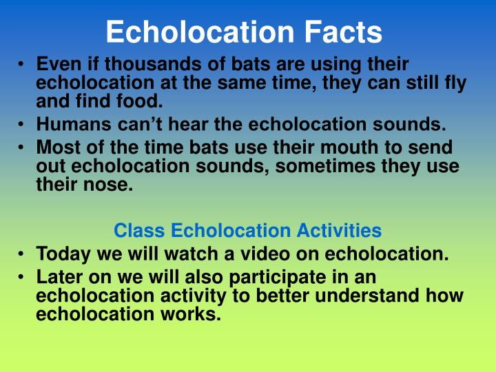 Echolocation Facts