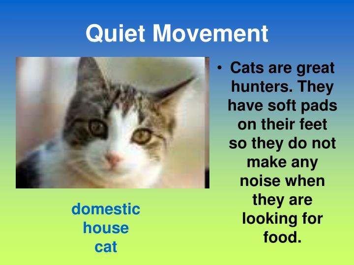 Quiet Movement