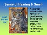 sense of hearing smell