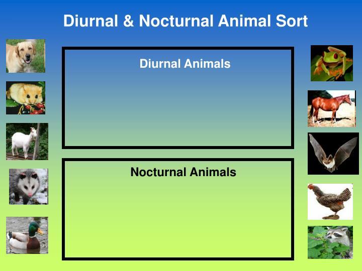 Diurnal Animals