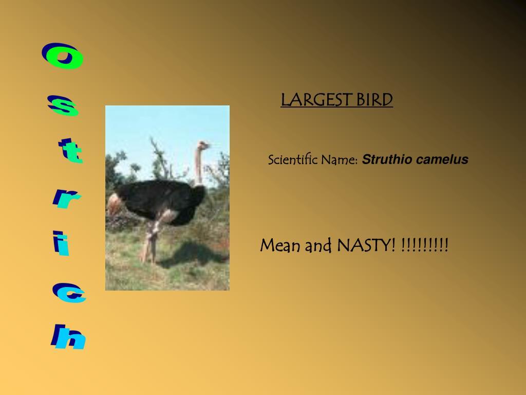 LARGEST BIRD