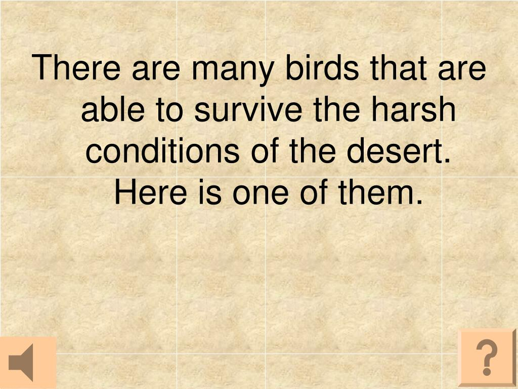 There are many birds that are able to survive the harsh conditions of the desert.  Here is one of them.