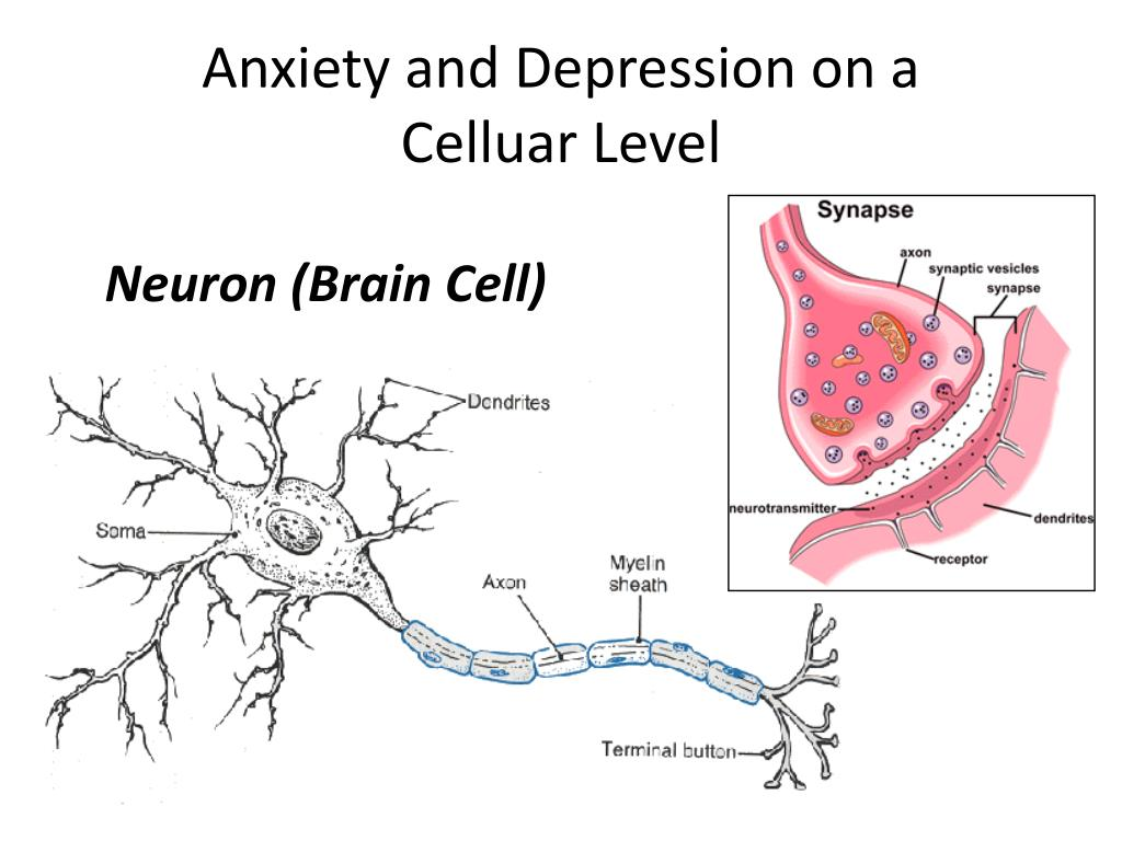 Anxiety and Depression on a
