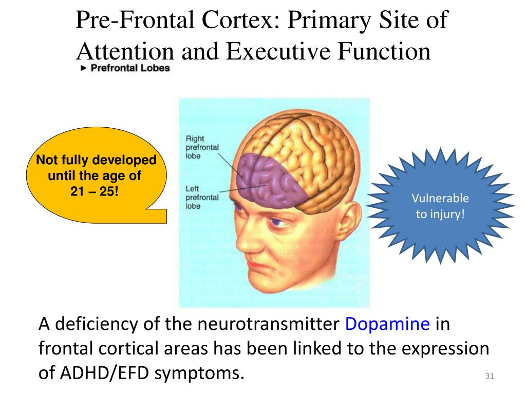 Pre-Frontal Cortex: Primary Site of