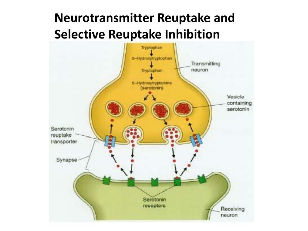 Neurotransmitter Reuptake and