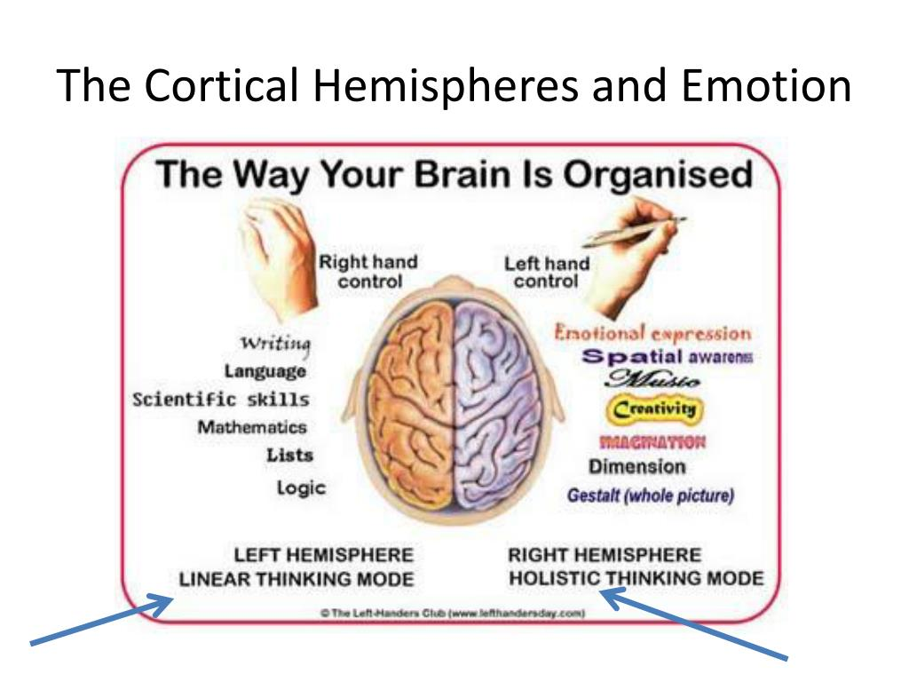The Cortical Hemispheres and Emotion