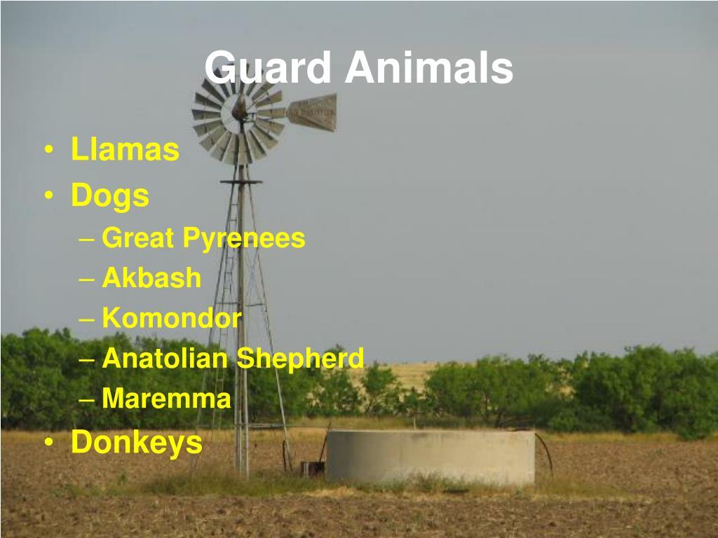 Guard Animals