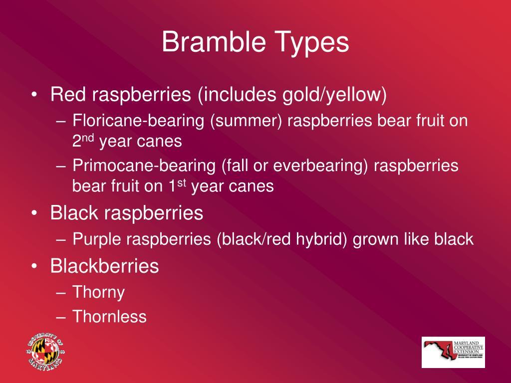 Bramble Types