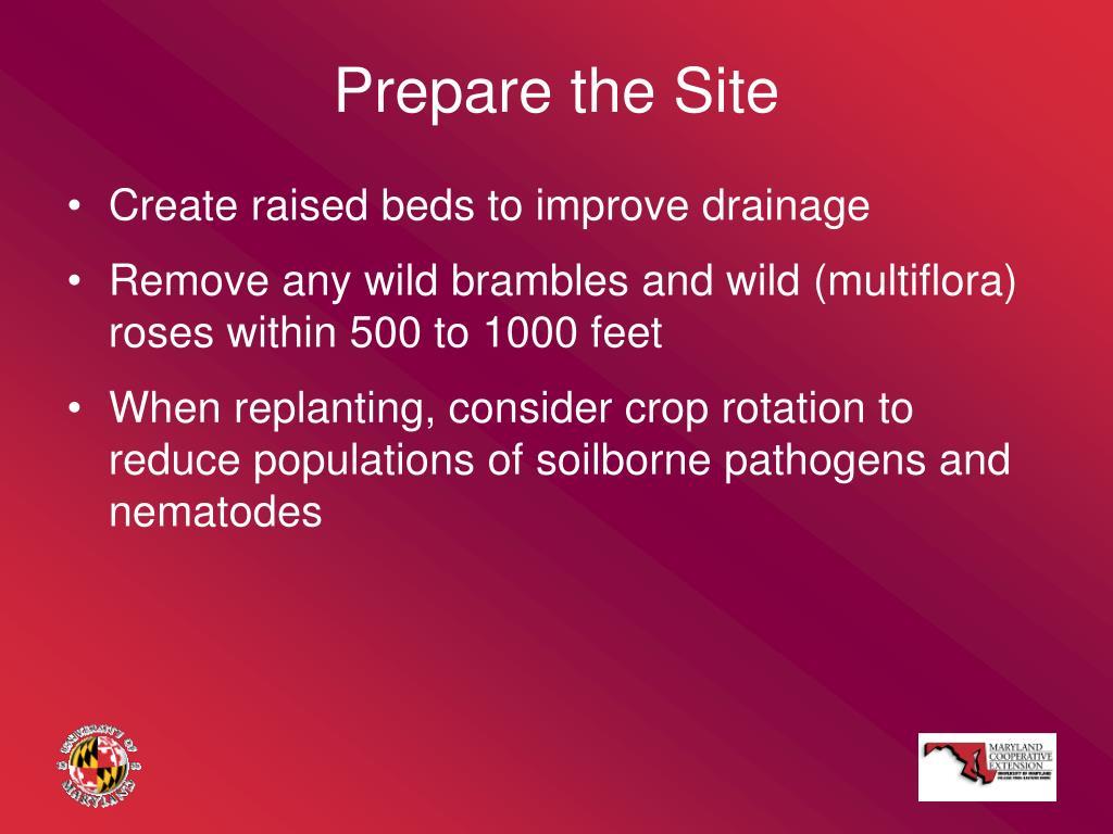 Prepare the Site