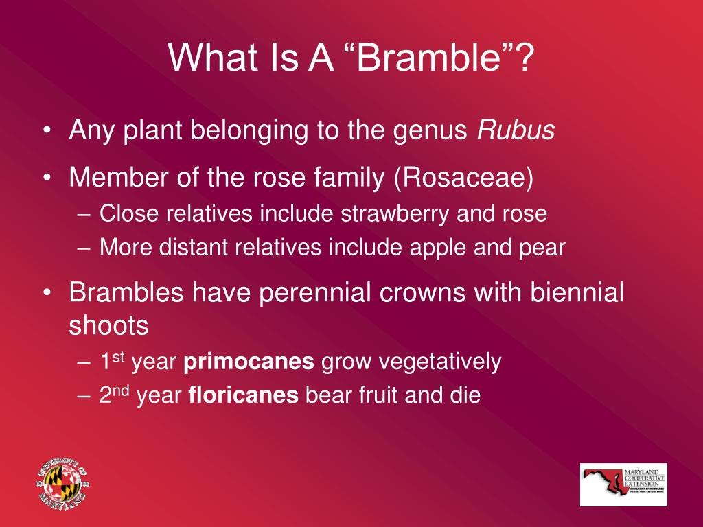 """What Is A """"Bramble""""?"""