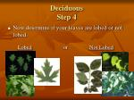 deciduous step 4