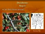 deciduous step 6