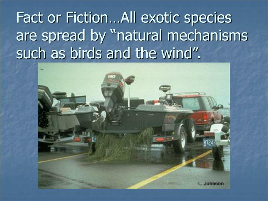 "Fact or Fiction…All exotic species are spread by ""natural mechanisms such as birds and the wind""."