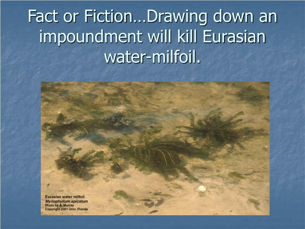 Fact or Fiction…Drawing down an impoundment will kill Eurasian water-milfoil.