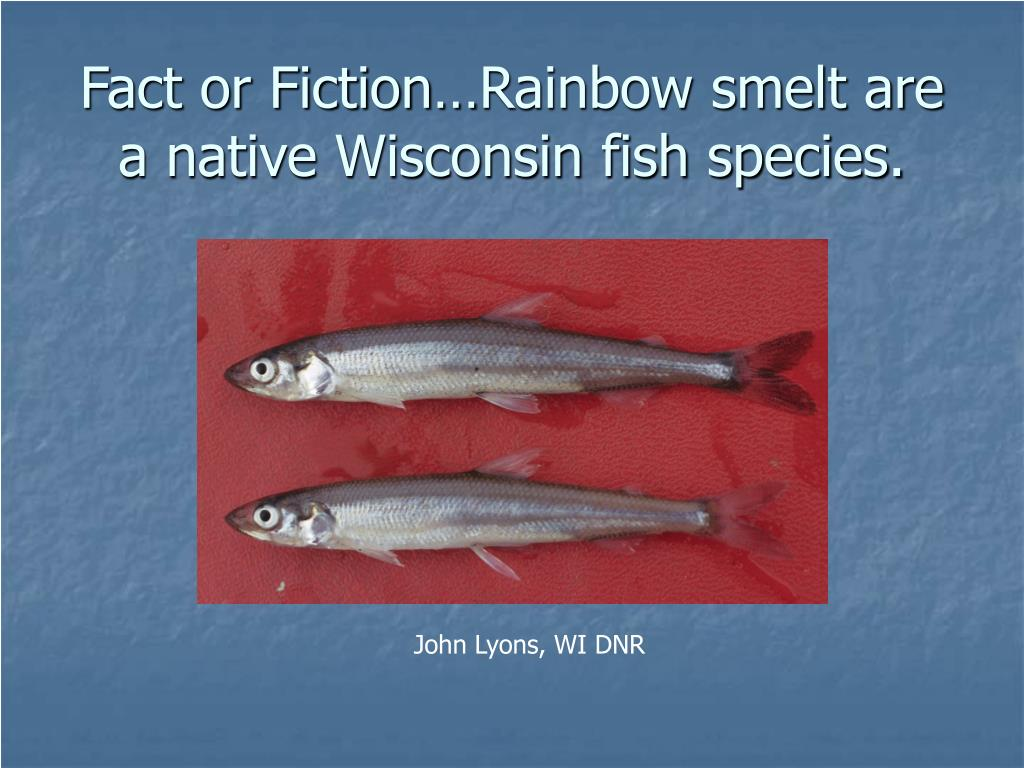 Fact or Fiction…Rainbow smelt are a native Wisconsin fish species.