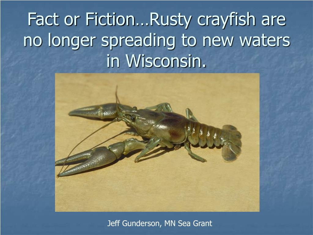 Fact or Fiction…Rusty crayfish are no longer spreading to new waters in Wisconsin.