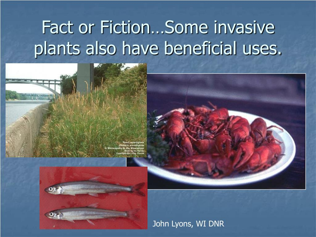 Fact or Fiction…Some invasive plants also have beneficial uses.