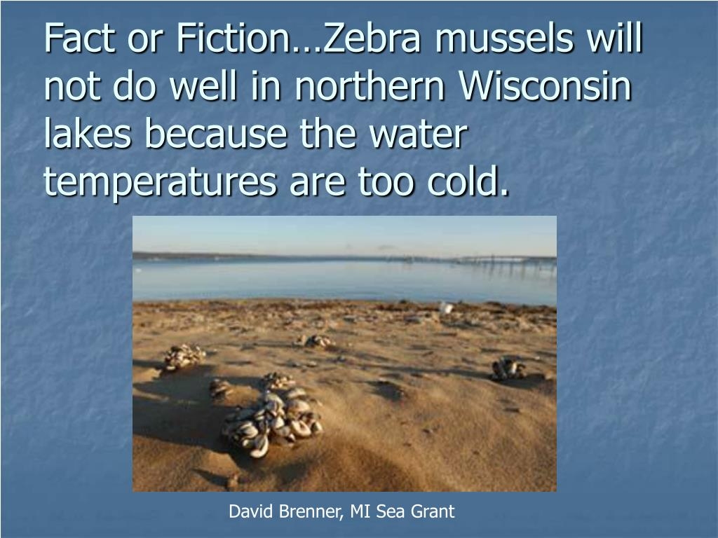 Fact or Fiction…Zebra mussels will not do well in northern Wisconsin lakes because the water temperatures are too cold.