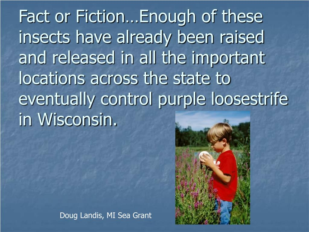 Fact or Fiction…Enough of these insects have already been raised and released in all the important locations across the state to eventually control purple loosestrife in Wisconsin.