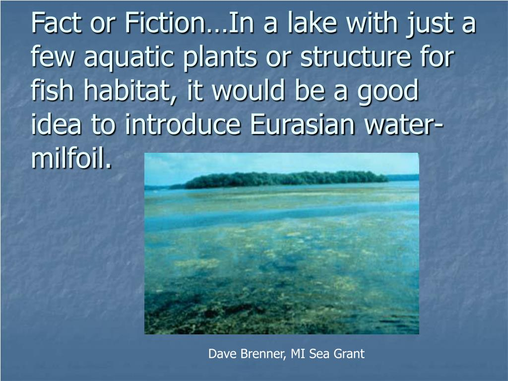 Fact or Fiction…In a lake with just a few aquatic plants or structure for fish habitat, it would be a good idea to introduce Eurasian water-milfoil.