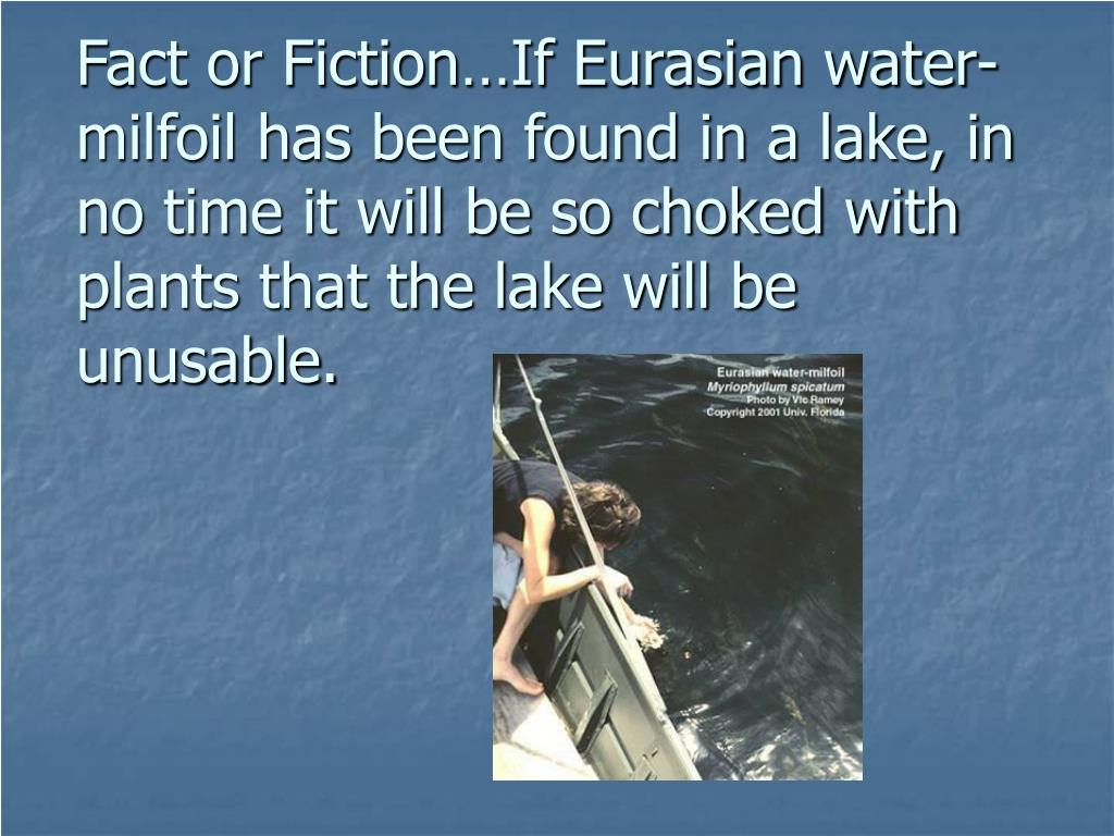 Fact or Fiction…If Eurasian water-milfoil has been found in a lake, in no time it will be so choked with plants that the lake will be unusable.