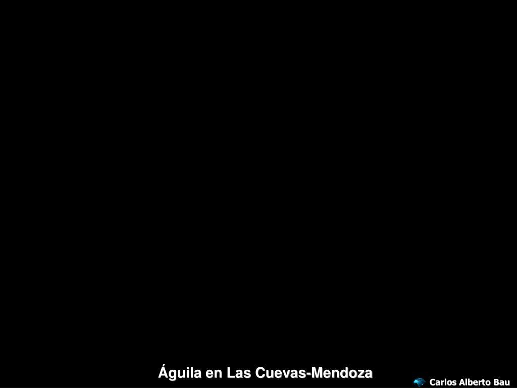 Águila en Las Cuevas-Mendoza
