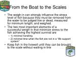 from the boat to the scales