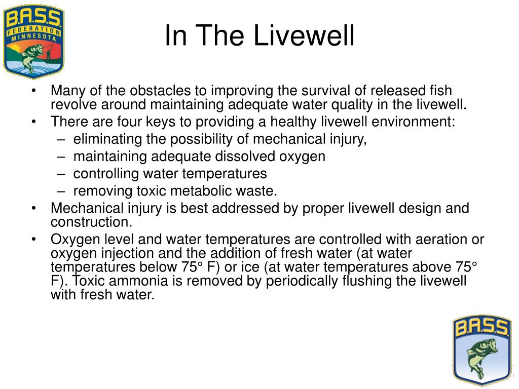 In The Livewell
