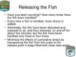 releasing the fish36