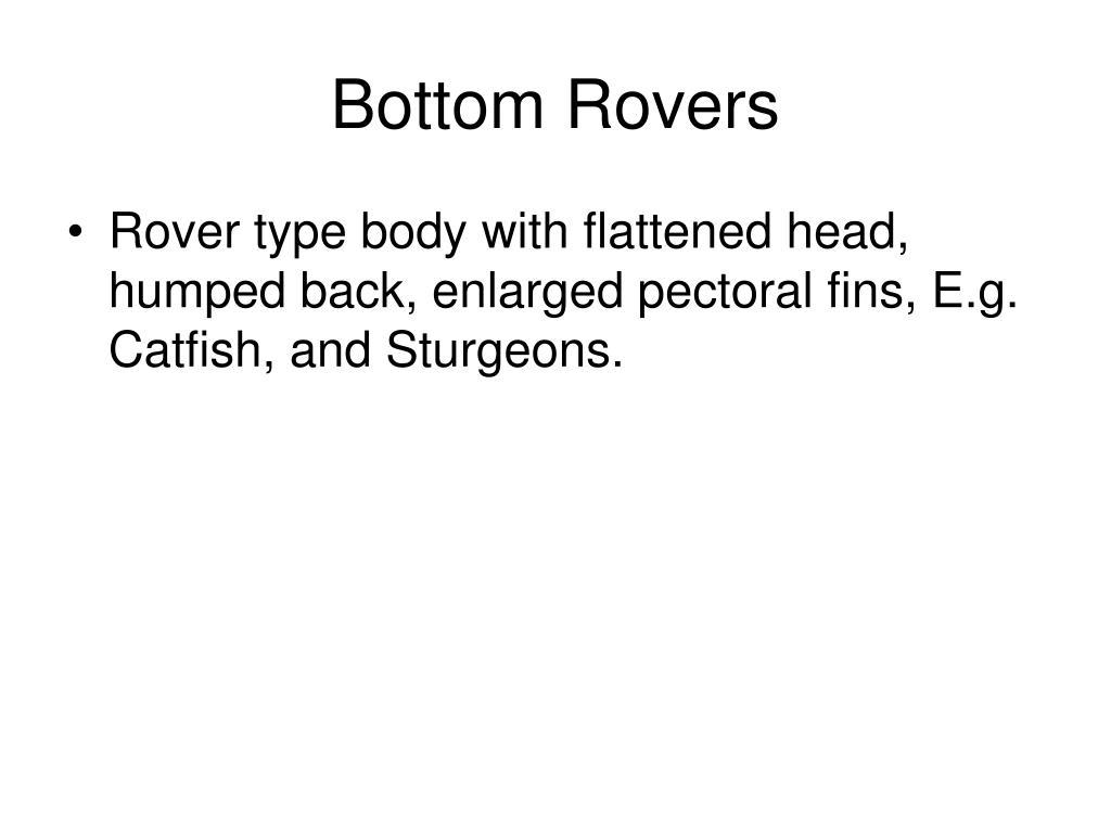 Bottom Rovers