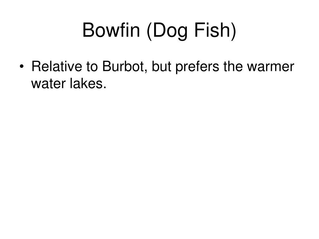 Bowfin (Dog Fish)
