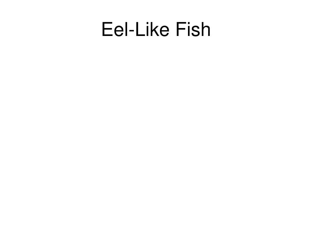 Eel-Like Fish