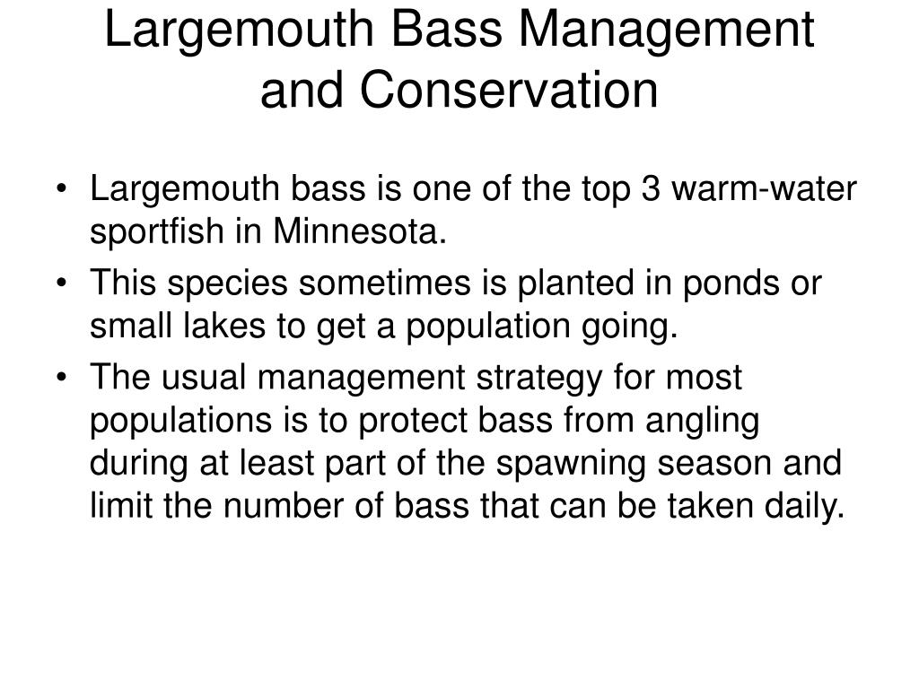 Largemouth Bass Management and Conservation