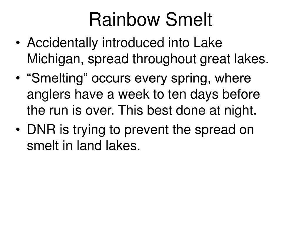 Rainbow Smelt