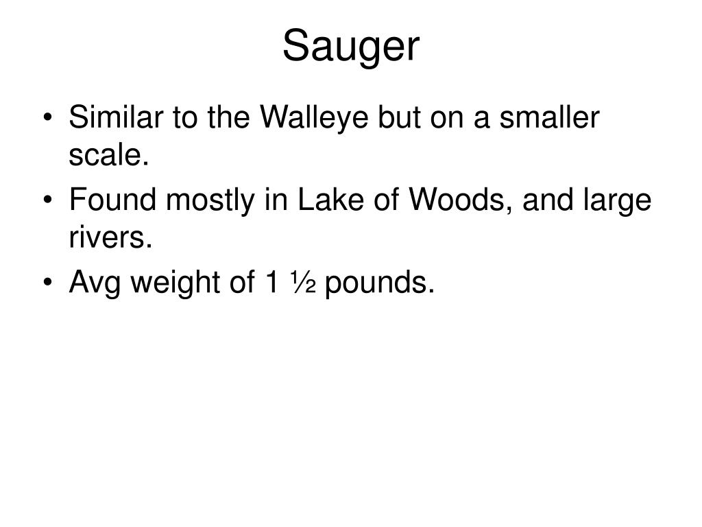 Sauger