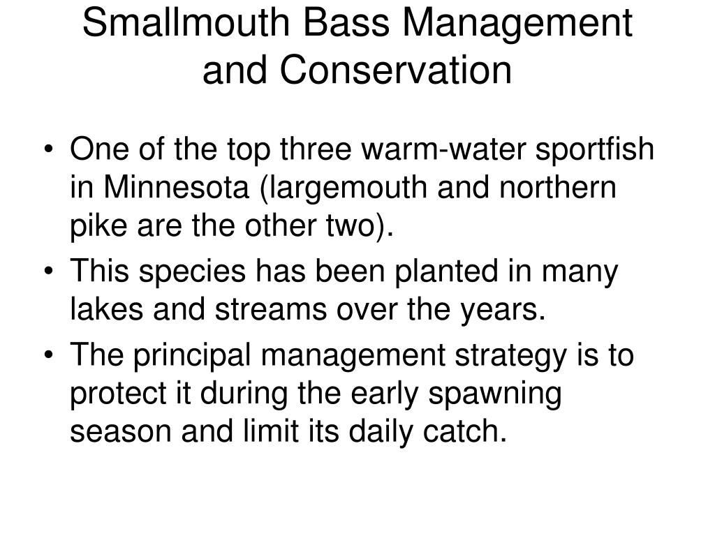 Smallmouth Bass Management and Conservation