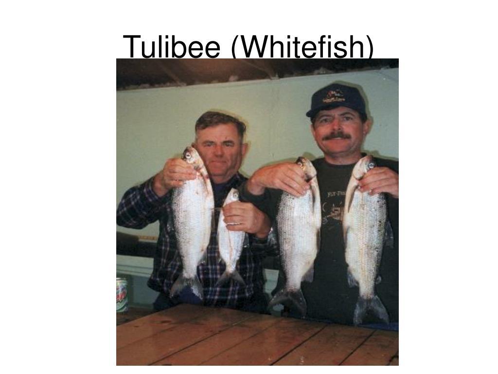 Tulibee (Whitefish)