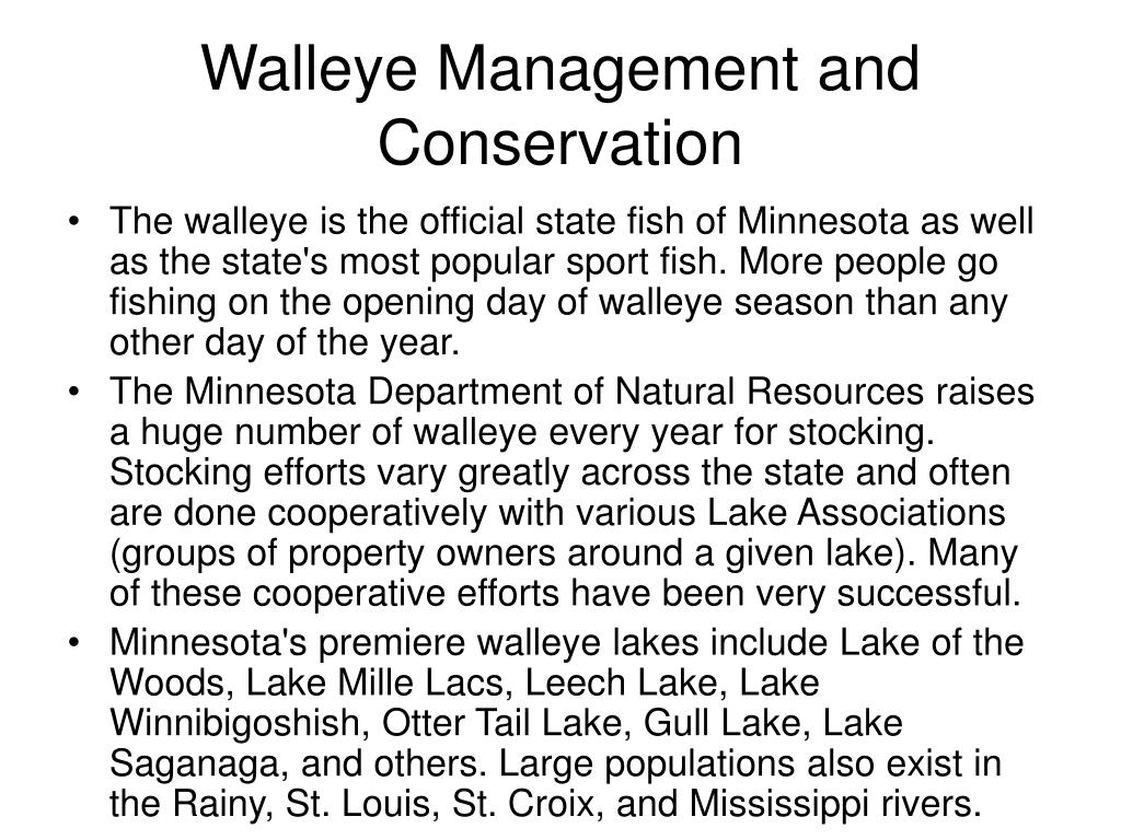 Walleye Management and Conservation
