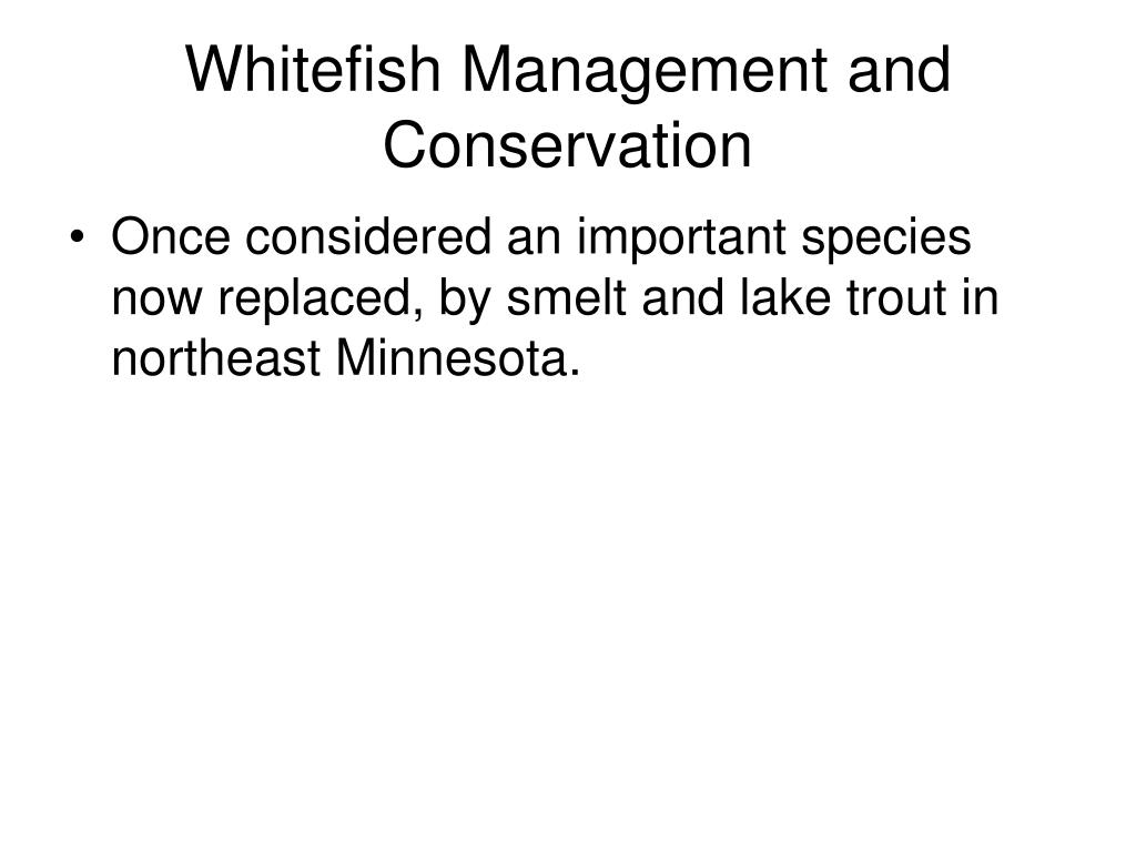Whitefish Management and Conservation