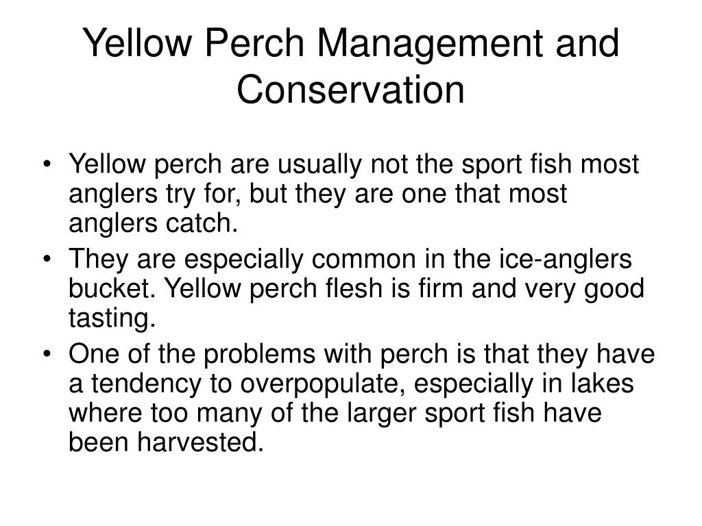 Yellow Perch Management and Conservation