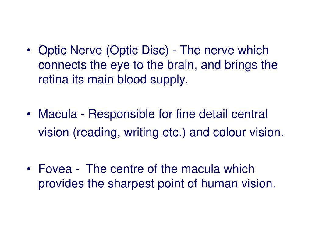 Optic Nerve (Optic Disc) - The nerve which connects the eye to the brain, and brings the retina its main blood supply.