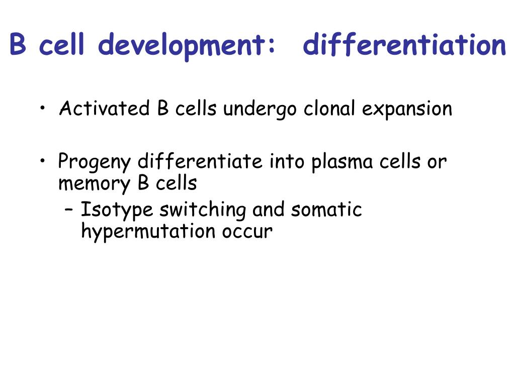 B cell development:  differentiation