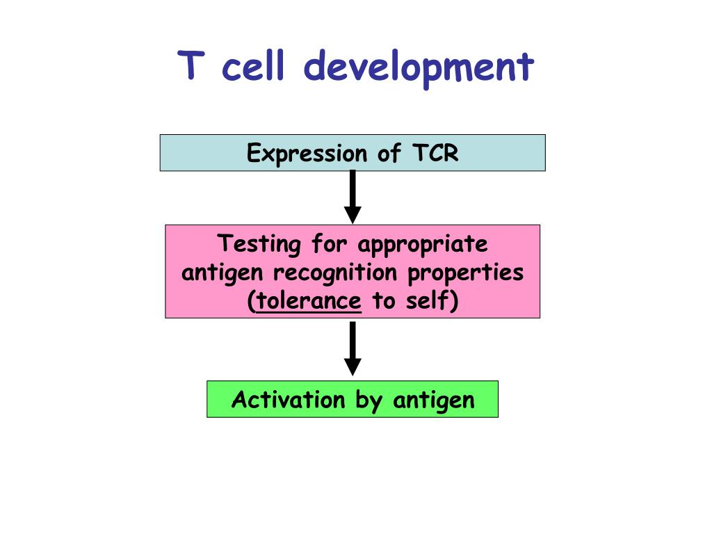 Testing for appropriate antigen recognition properties (